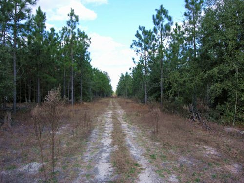 68.01 Acres Wooded : Hephzibah : Richmond County : Georgia