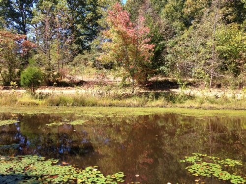 65+ Wooded Acres With Pond : Mcdermott : Scioto County : Ohio