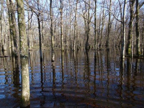 60 +/- Acres W/ Leveed Timber : England : Lonoke County : Arkansas