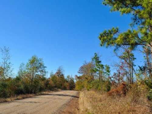 34.2 Acres Fm 1645 : Center : Shelby County : Texas
