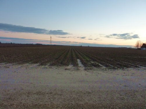 Bay Gin's White Cotton & Corn Farm : Bay : Craighead County : Arkansas