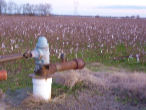 Bay Gin Farmland Auction : Bay : Craighead County : Arkansas