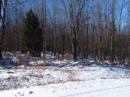 5 Acres Near Several State Forests : Plymouth : Chenango County : New York