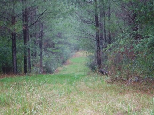 Excellent Investment Opportunity : Silver Creek : Lawrence County : Mississippi