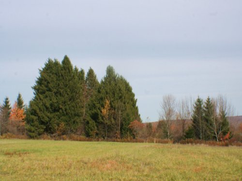 14 Acres With Drilled Water Well : Ellington : Chautauqua County : New York