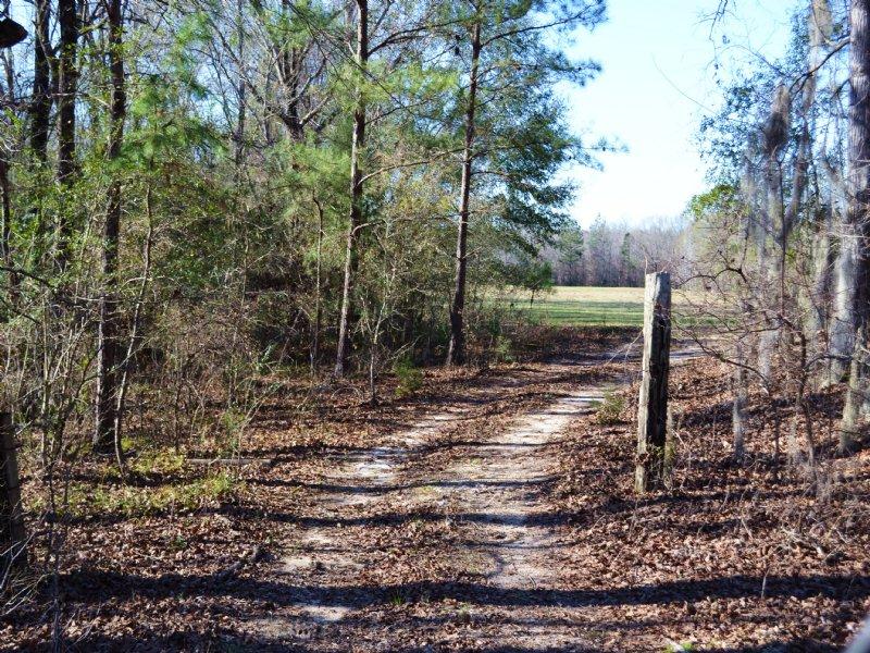 Big Springs Tract 103.7 Acres : Autaugaville : Autauga County : Alabama
