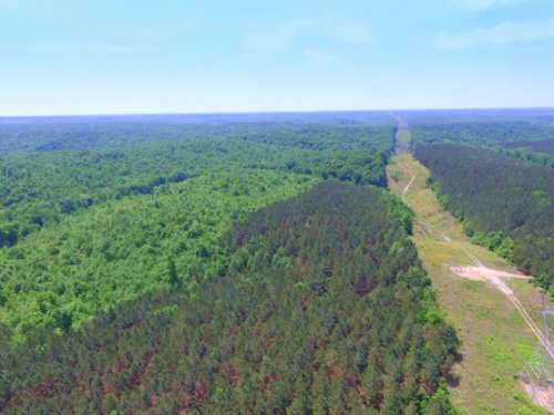 237 Acre Hunting Land : Hampshire : Lewis County : Tennessee