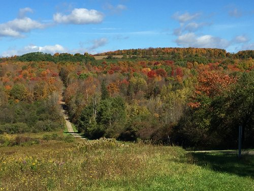 Land With Stream Seclusion 41 Acres : Fremont : Steuben County : New York