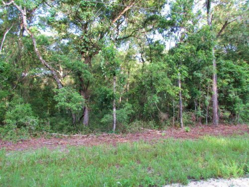 Nice 4.19 Ac Wooded Lot 769581 : Chiefland : Levy County : Florida