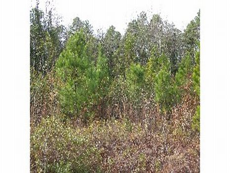 Mill Bay : Lumberton : Bladen County : North Carolina
