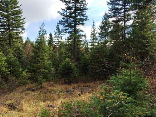 Antler Ridge Acreage : Whitefish : Flathead County : Montana