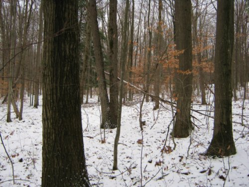 Land With Harvestable Timber 57 Ac : Reading Center : Schuyler County : New York