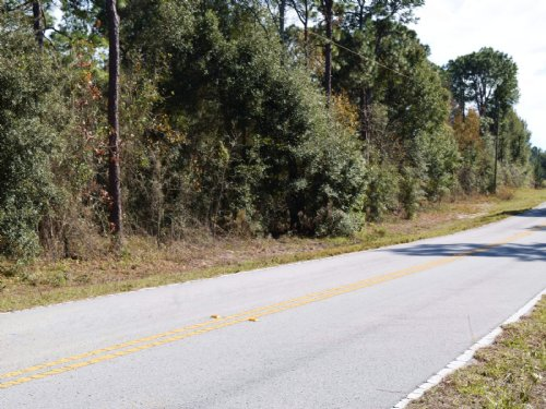 7 Acres High And Dry : Spring Hill : Hernando County : Florida