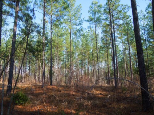 Copland Fabrics, Llc Tract : Yanceyville : Caswell County : North Carolina