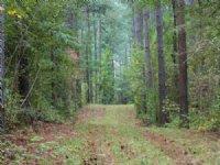 160 Ac - Great Hunting Tract : Greensboro : Greene County : Georgia