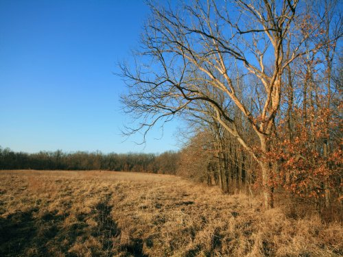 80 Acres : Vandalia : Audrain County : Missouri