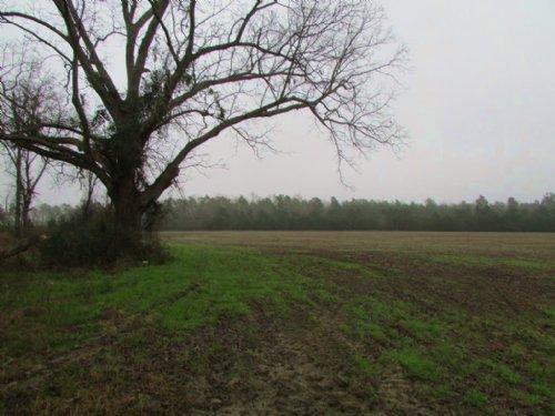 Roper Woods Farm Tract : Kingstree : Williamsburg County : South Carolina