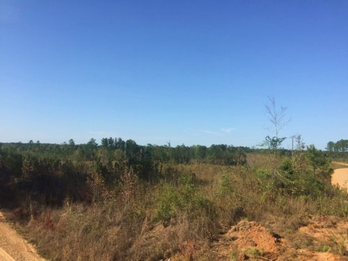 120 Acres For Sale : Mccool : Choctaw County : Mississippi