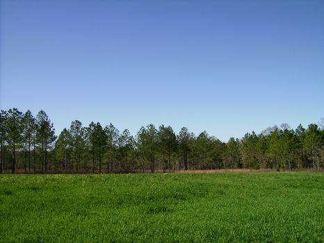 Quail Hunters Paradise : Cordele : Crisp County : Georgia