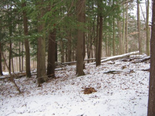 Building Lot Next To Arnot Forest : Cayuta : Schuyler County : New York