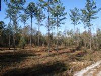 Taylor Farm On The St Mary's River : Glen Saint Mary : Baker County : Florida