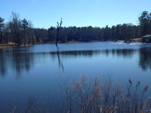 Beautiful Lake Tract : Byron : Crawford County : Georgia