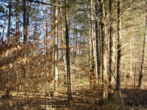 Secluded Hunting Grounds : Cumberland : Virginia