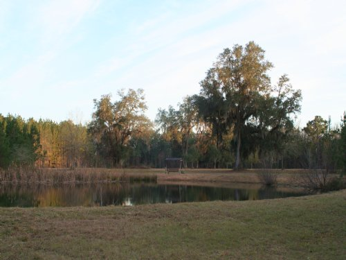35 Acres, Sawtooth Ridge : Callahan : Nassau County : Florida