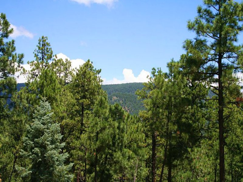28 Acre Forested Northern Az Estate : Alpine : Apache County : Arizona