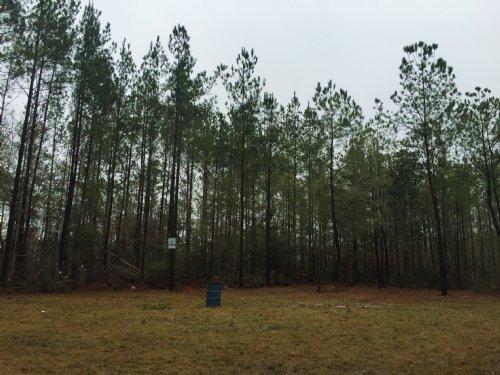 Martin Tract : Florala : Covington County : Alabama