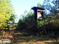 Loris Hunting Land : Loris : Horry County : South Carolina