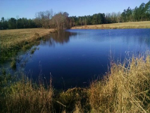 Beautiful Homesite And Farm : Fairmont : Robeson County : North Carolina