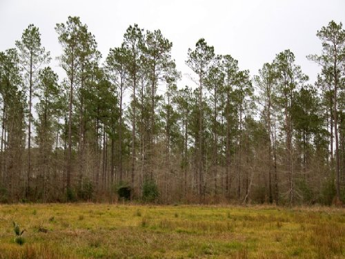 375 Ac Hob-Warren Rd. : Sour Lake : Hardin County : Texas