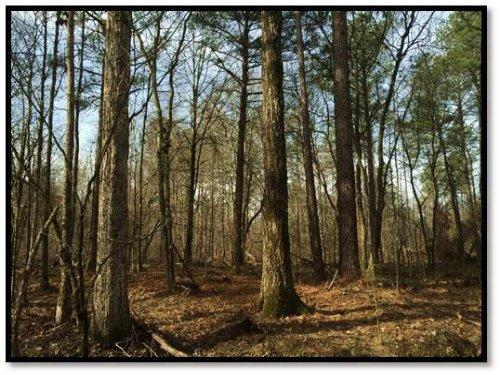 Flat Rock Branch Tract : Saluda : South Carolina