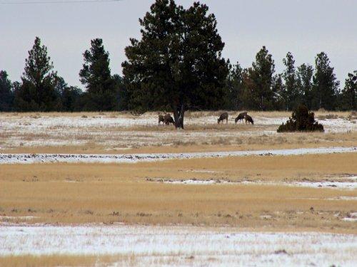 Tract 7 Hartland Ranches : Upton : Weston County : Wyoming