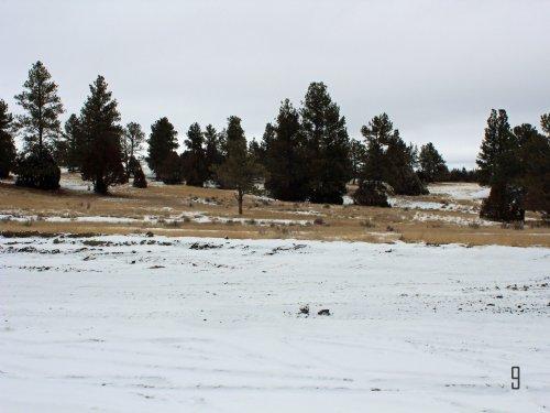 Tract 9 Hartland Ranches : Upton : Weston County : Wyoming