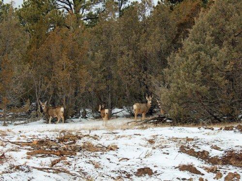 Tract 10 Hartland Ranches : Upton : Weston County : Wyoming