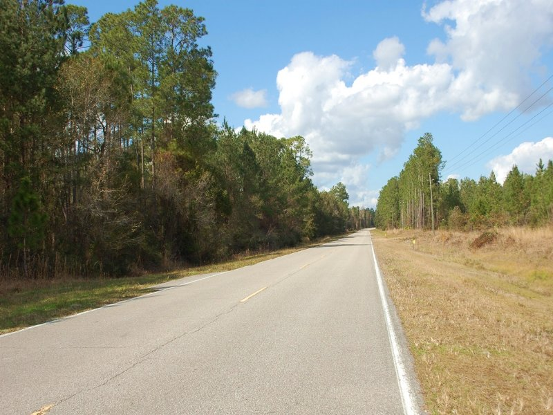 42 Acres Pines & Hardwood (a-482) : Hawthorne : Alachua County : Florida