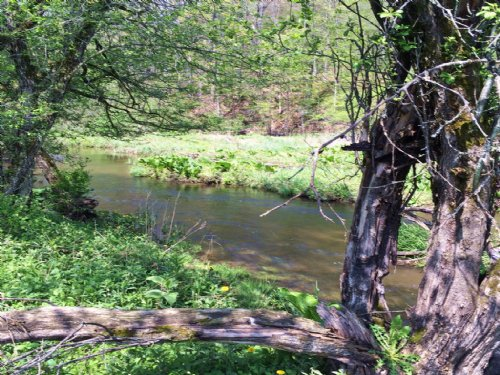 Land Borders State Forest & Stream : Birdsall : Allegany County : New York