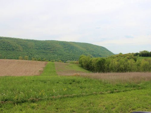 11 +/- Acres, Open / Wooded Land : Orangeville : Columbia County : Pennsylvania