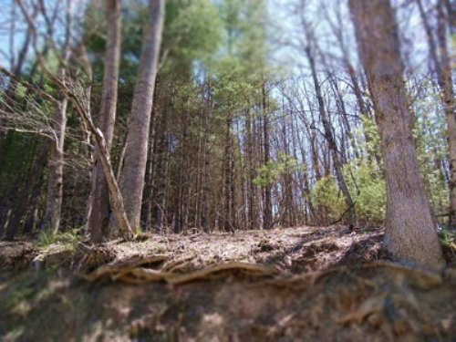 Forested Lot Near New River : Independence : Grayson County : Virginia