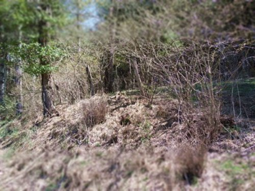 Wooded Residential Lot : Independence : Grayson County : Virginia