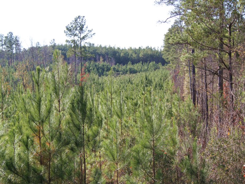 Highway 45 North Tract : Mount Willing : Lowndes County : Alabama