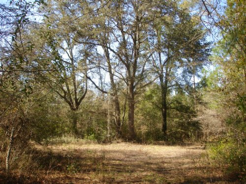 42 Acres : Moultrie : Colquitt County : Georgia