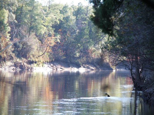 Pea River East Tract : Geneva County : Alabama