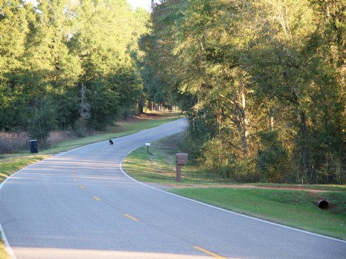 Sandy Creek Tract : Geneva County : Alabama