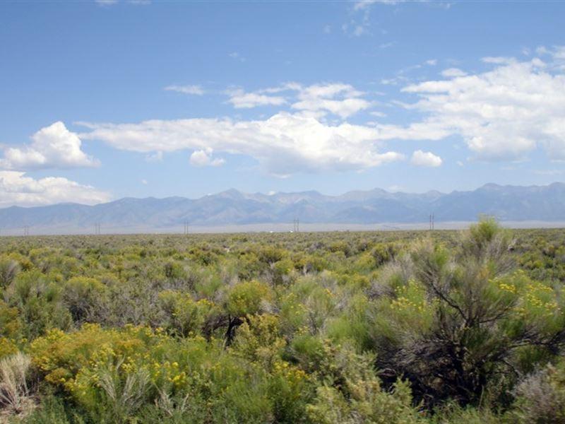 8131258, 160 Acres Of Peace And Qu : Saguache : Saguache County : Colorado