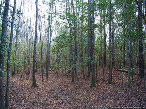 Premier Hunting Tract : Poplarville : Pearl River County : Mississippi