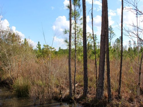 17 Acres - Lot 15 - Tall Pines S/d : Starke : Bradford County : Florida
