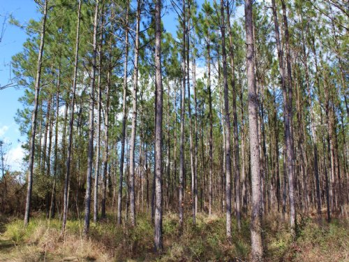 17 Acres - Lot 16 - Tall Pines S/D : Starke : Bradford County : Florida
